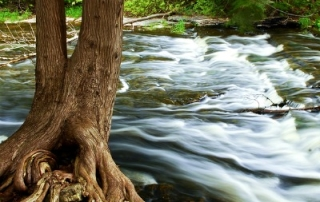 Water rushing by tree in river rapids in Ontario Canada